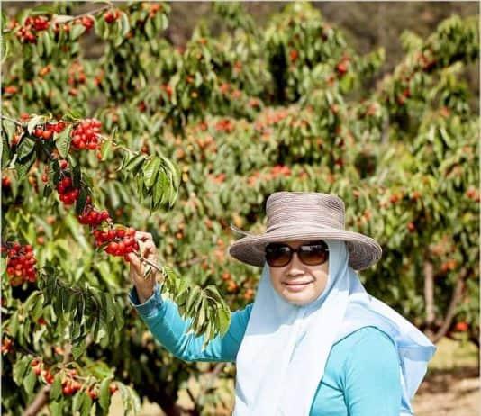 Cherry Picking-OZIP