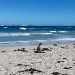 Kangaroo Island#OZIP