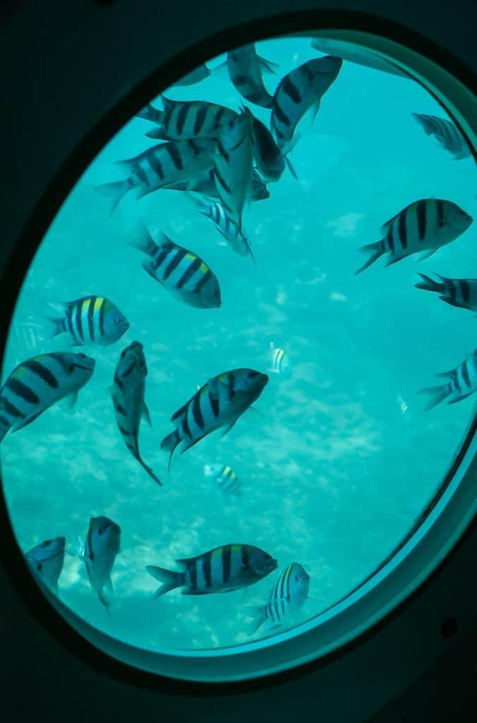 1)Odyssey Submarine