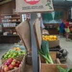 Lonsdale Tomato Farm-OZIP
