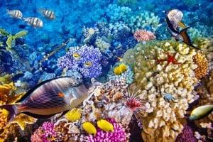 Wisata_Bunaken diving