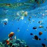 Berbagai jenis ikan karang berenang di terumbu karang taman laut Olele, Kabupaten Bonebolango, Gorontalo, Selasa (1/9).